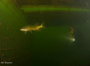 De nieuwe onderwaterwereld van De Baars