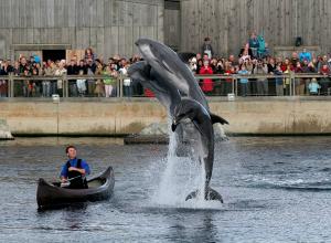 Is Dolfinarium Harderwijk een circus met onwettige dierenshows?