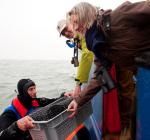 Mosselbanken en oesterriffen terug in de Noordzee. Unieke proef!