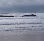 Vijf potvissen levend aangespoeld op Texel