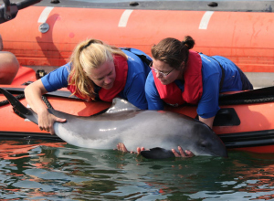 SOS Dolfijn wil weg uit Dolfinarium Harderwijk