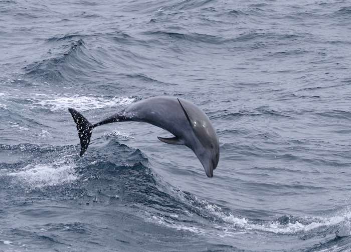 Springende Tuimelaars in de Noordzee