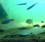 Nieuws over nieuw ontdekt duikpareltje. Met weer schitterende beelden!