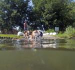 Hond dood door blauwalg in Meerse Plas