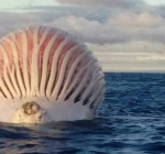 Drijvende bal stelt visser voor een raadsel