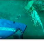 De steek van een Lionfish op 46 meter!