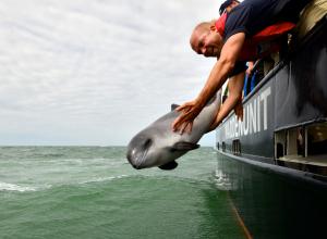 SOS Dolfijn breekt definitief met Dolfinarium Harderwijk