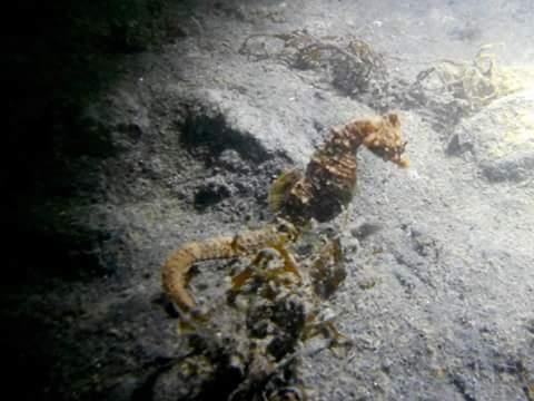 Zeepaardje gespot bij Oesterdam