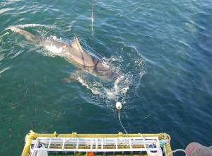 Ondernemer haaien incident publiceert brief