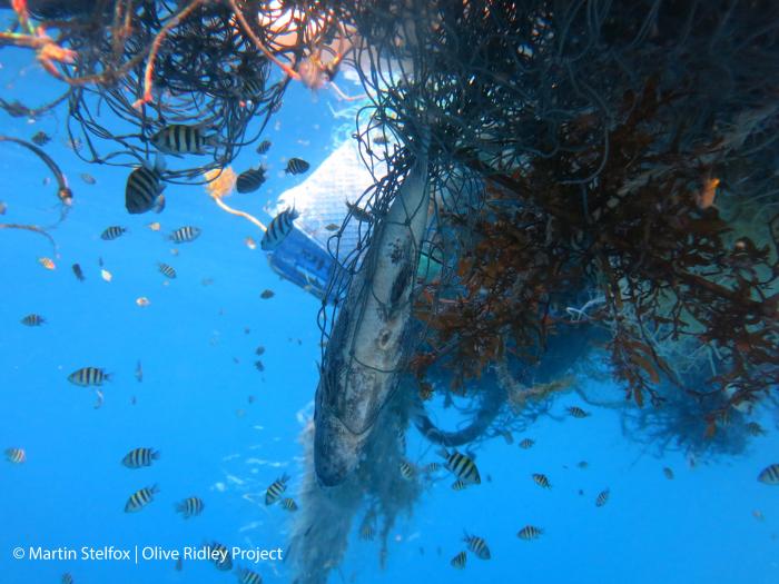 Californie betaalt duikers voor opruimen spooknetten