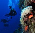 Dive Job Finder