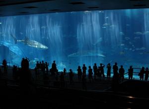 Haaienbassin Emmen wordt duikschool annex mega aquarium