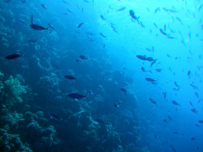 Oprichter Greenport Gelderland komt om bij duikongeval in Egypte
