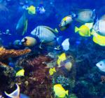 Spectaculair nieuws! Grootste koraalsysteem ter wereld ontdekt
