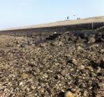 Levenloos lichaam in duikerspak gevonden bij Den Osse