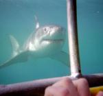 De man achter het haaienkooi incident vertelt zijn verhaal