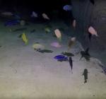 De vissen van TODI