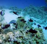Vlaamse duiker komt om bij duikongeval in Egypte