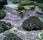 Mogelijk unieke doorbraak in wereldwijde redding koraalriffen