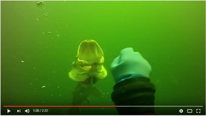 Monstersnoek bevrijden van pijnlijke vishaak