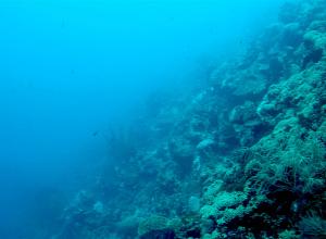 BAM vernielt koraal bij bouw megapier Curacao