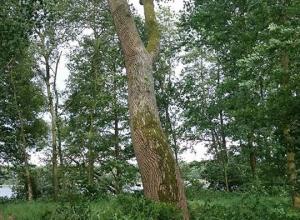 Instabiele boom bij instap 2 Ruinerwold