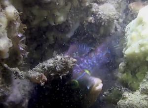 Lipvis Zeelandbrug op filmbeelden