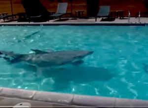 Dit haaienpak is super realistisch