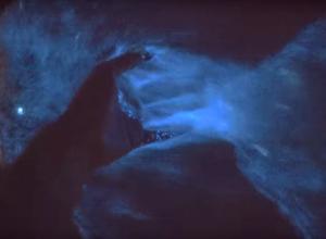 Duikers beleven magisch zeevonk in Katwijk