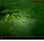 De krab, de grondels en de worm