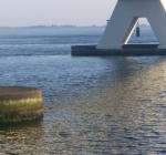 Duikers ontdekken nieuwe garnaalsoort bij de Zeelandbrug