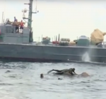 Duikers redden afgedwaalde olifant op open zee