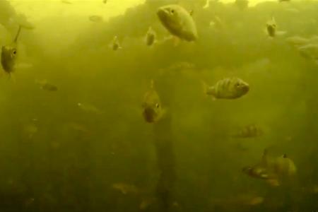 Groot duikwrak ontdekt bij Alem