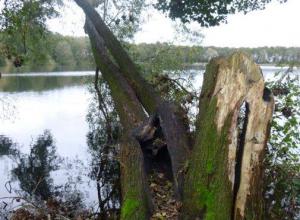 Omhellende boom veroorzaakt gevaar bij Ruinerwold