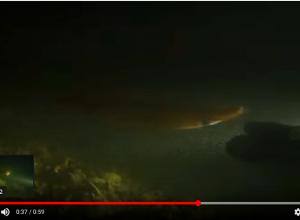 Als een pijlinktvis met je wil spelen, speel je dan mee?