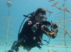 Een dagje coral restauration op Bonaire. Dat gaat zo..