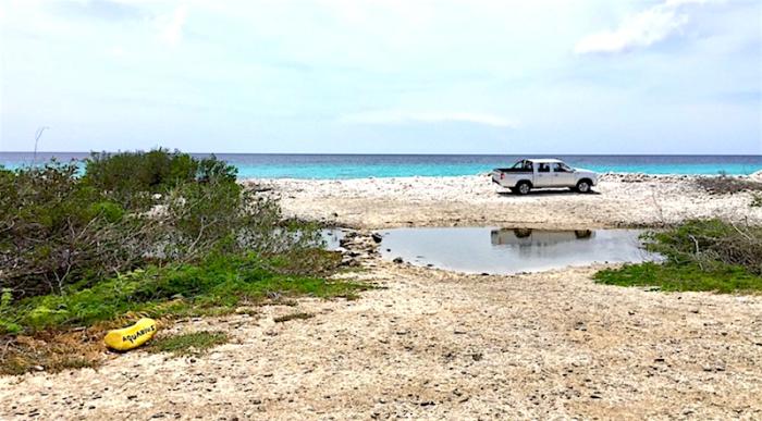 Sargassum heeft weinig invloed op duiken Bonaire