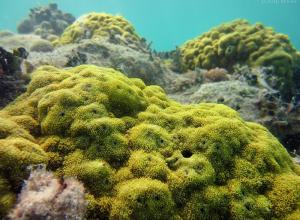 Groot gezond koraalrif ontdekt bij Saba