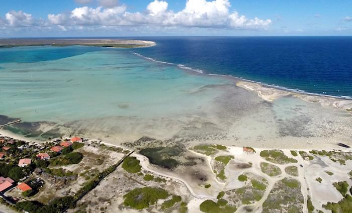 Vereende krachten tegen zeegrasvervuiling Bonaire