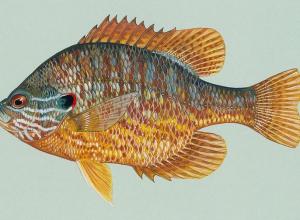 Is dit onze lionfish? En is het ook hier tijd voor de 'hunt'?