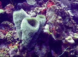 Doe mee met Reeffiesta op Bonaire