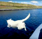 This is how you walk your dog if you own a liveaboard
