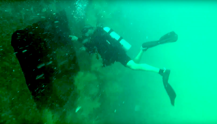 Divers can't believe what's living inside this wreck
