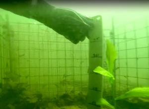 Visuitzet kan slecht uitpakken voor jouw duikstek