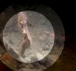 Paul Engels filmt bevalling zeepaardje Oosterschelde