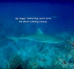 Herken de lichaamstaal van de haai. Oefen het in dit filmpje