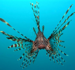 Artificial intelligence in battle against lionfish
