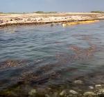 Bonaire wederom geplaagd door Sargassum zeewier