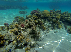 Allereerste organisme ontdekt dat cholrofyl maakt zonder fotosynthese