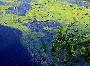 Negatief zwemadvies Oostvoornse Meer vanwege Blauwalg
